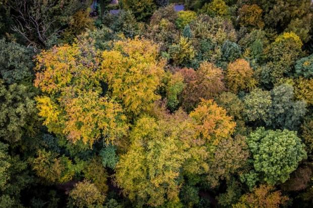 Herbstwald ©Volker Lannert