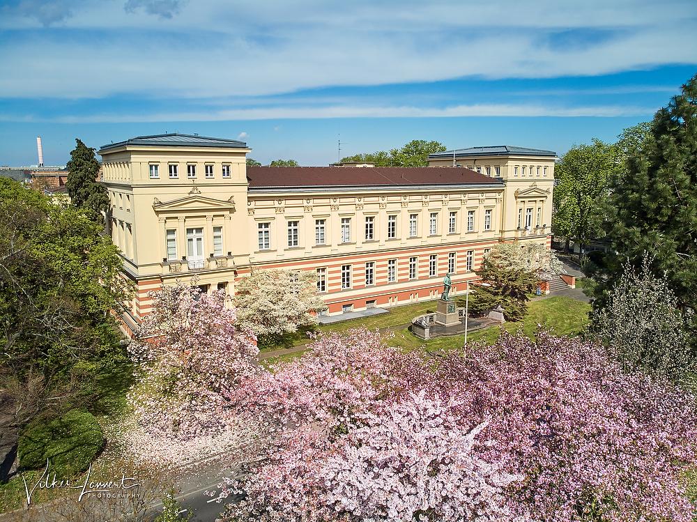 Kirschblüten vor dem Geographischen Institut der Bonner Universität am 18.04.2018
